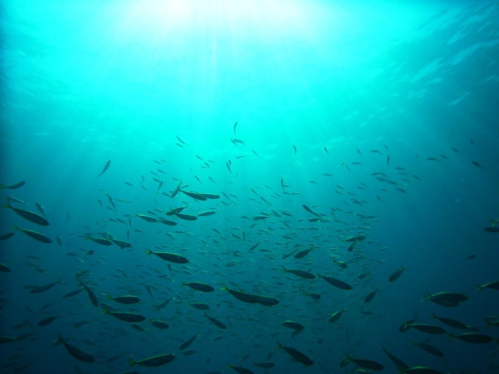 魚突きイメージ