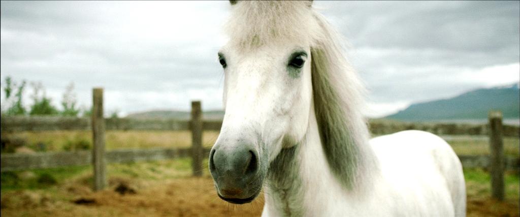 愛らしい馬