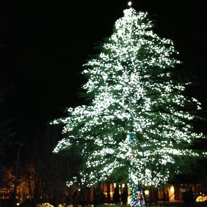 高さ18mのツリー