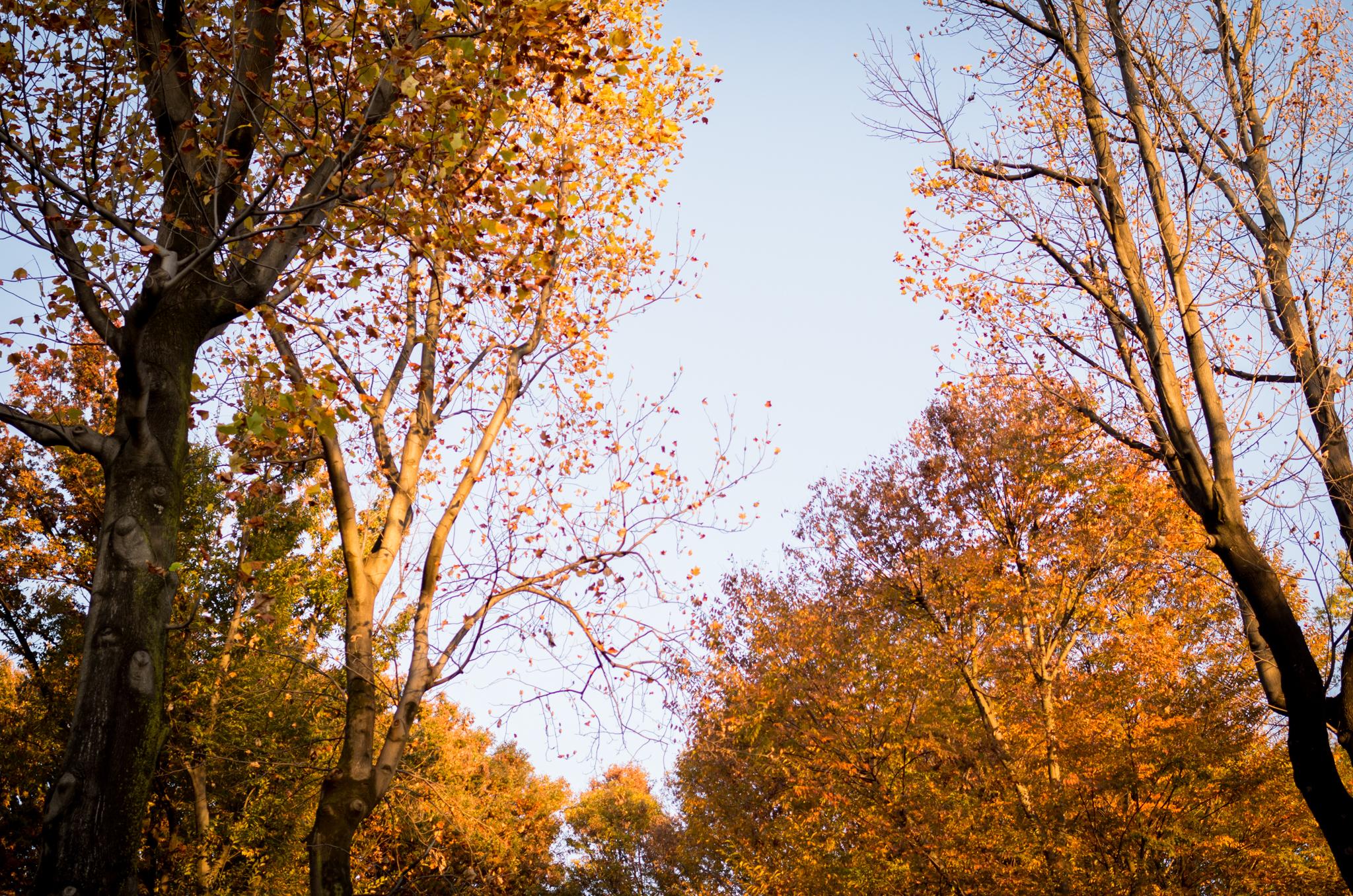 代々木公園紅葉