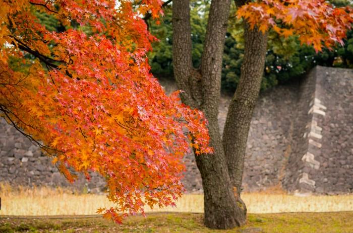 乾通り紅葉