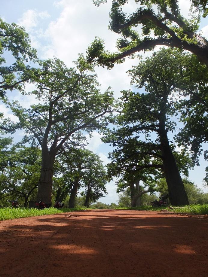セネガル 林