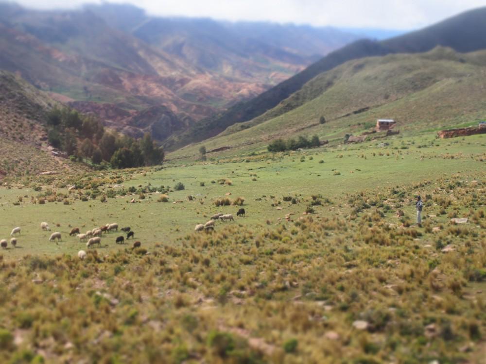 アンデス山脈と羊