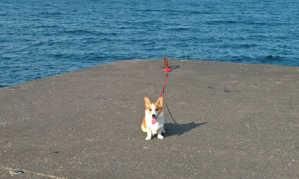 伊豆大島にペットを連れて行ってみた