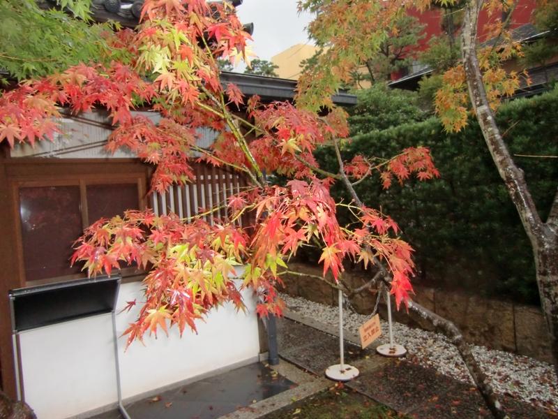 小倉城庭園8