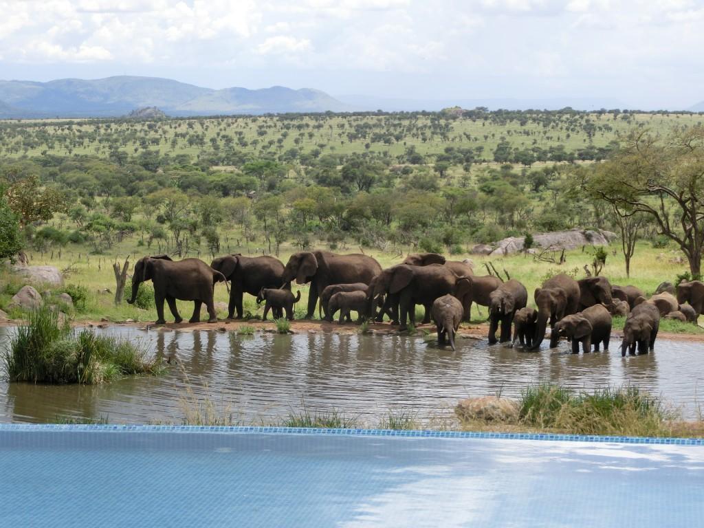 タンザニア ホテルから見る象
