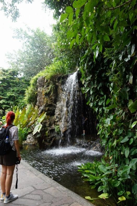 植物園・滝