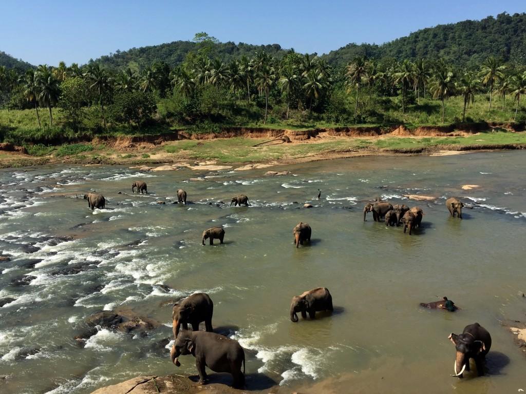 川で水浴びする象の群れ