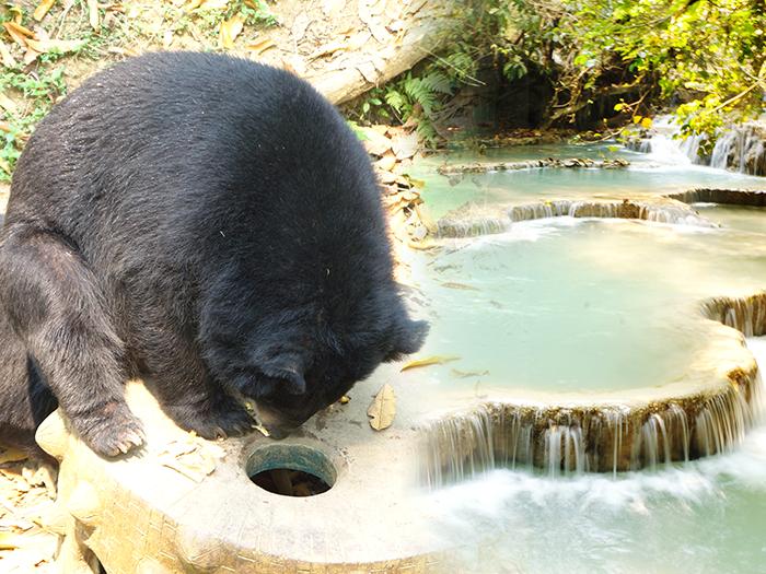 海外の動物園が面白い!動物に目がない筆者がオススメする世界の動物園