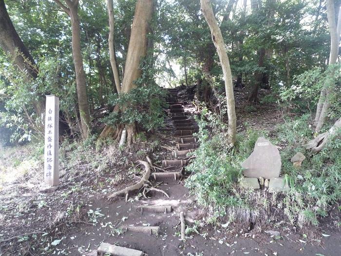 ●-13【トトロ:白旗塚(塚森)-7】700px P1040511