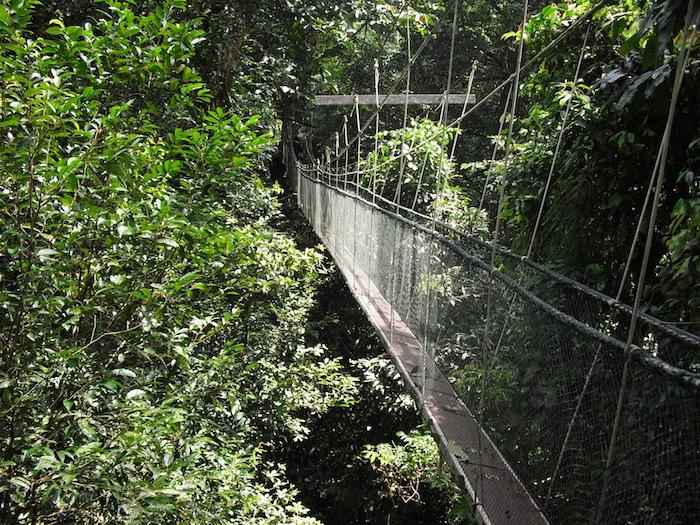 ムル国立公園 キャノピーウォーク