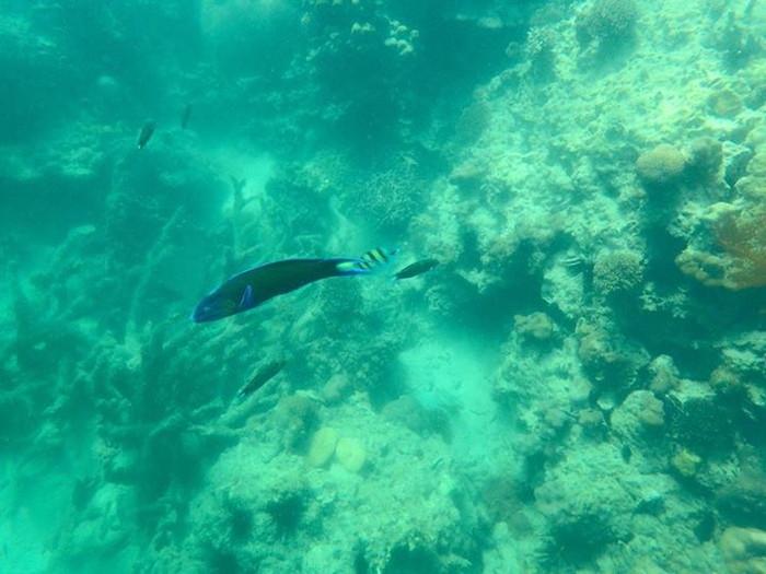 クラダン島の熱帯魚