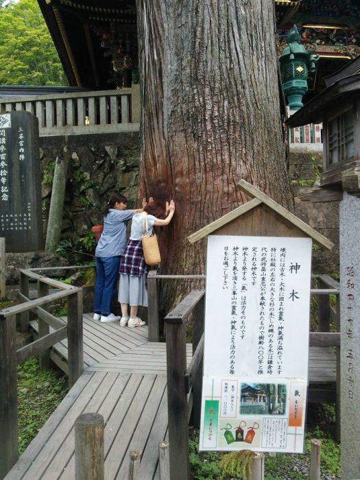 三峯神社 神木