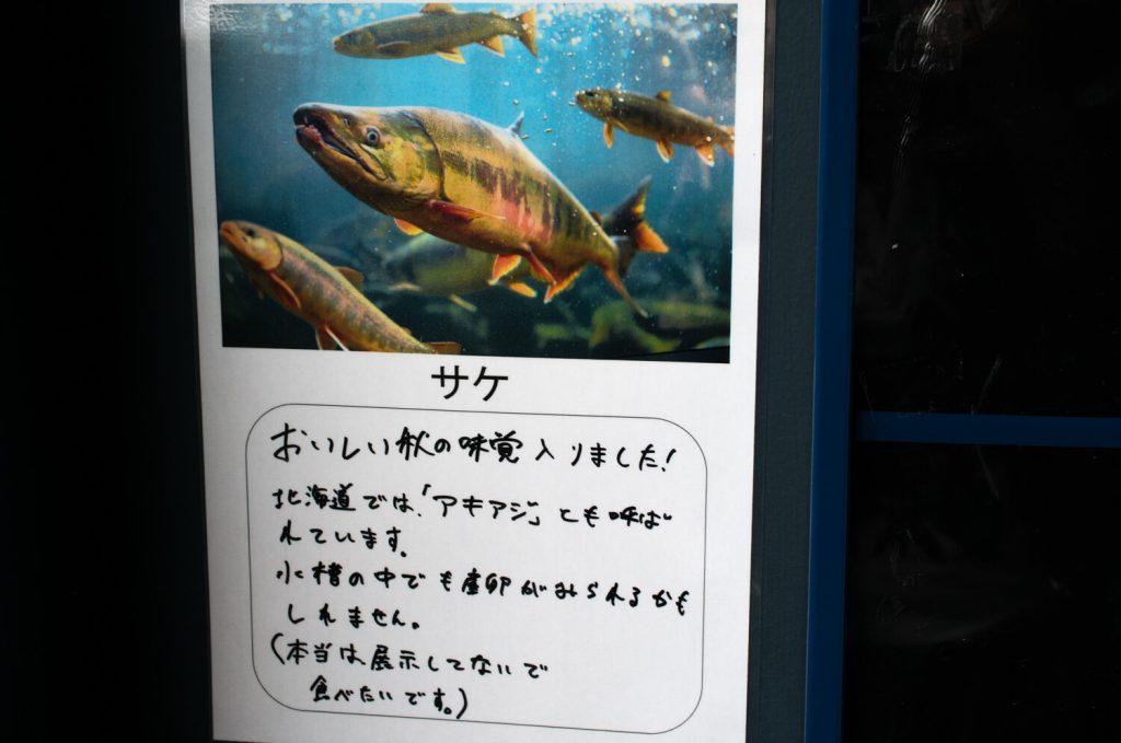 北の大地の水族館(山の水族館) サケ説明