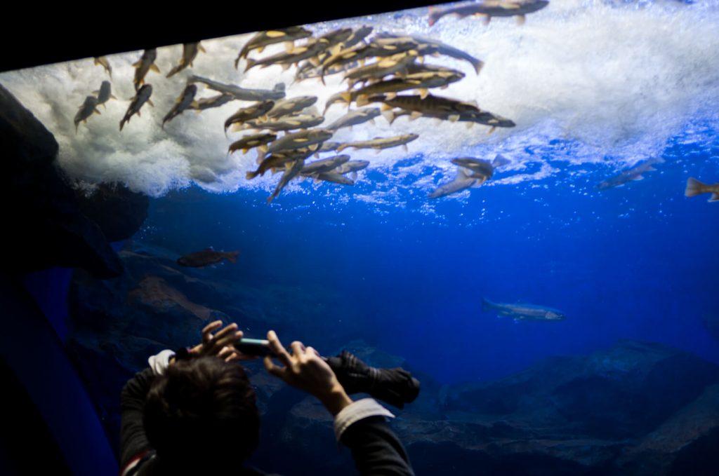 北の大地の水族館(山の水族館)オショロコマ