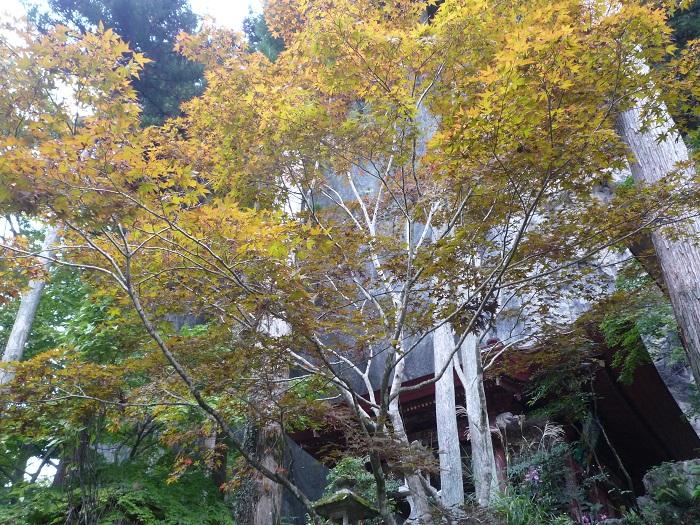 ●15【秩父紅葉狩り②-130札所28番橋立堂】✪✪(700px) P1070121