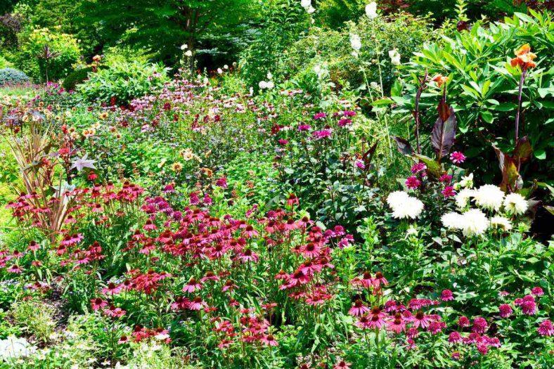 ラ・カスタナチュラルヒーリングガーデンで咲き乱れる花々