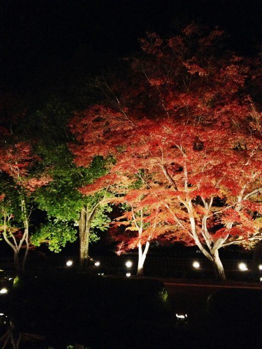 会場に入ると、紅葉のライトアップの世界が。素敵です。