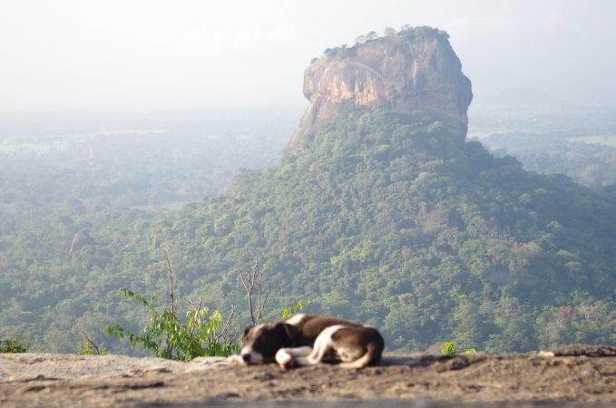シギリヤロックに行くのもいいけどPidurangala Rockから見たシギリヤロックも素敵