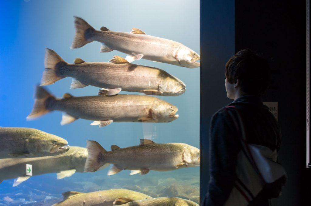 「山の水族館」が年々パワーアップしている気がする