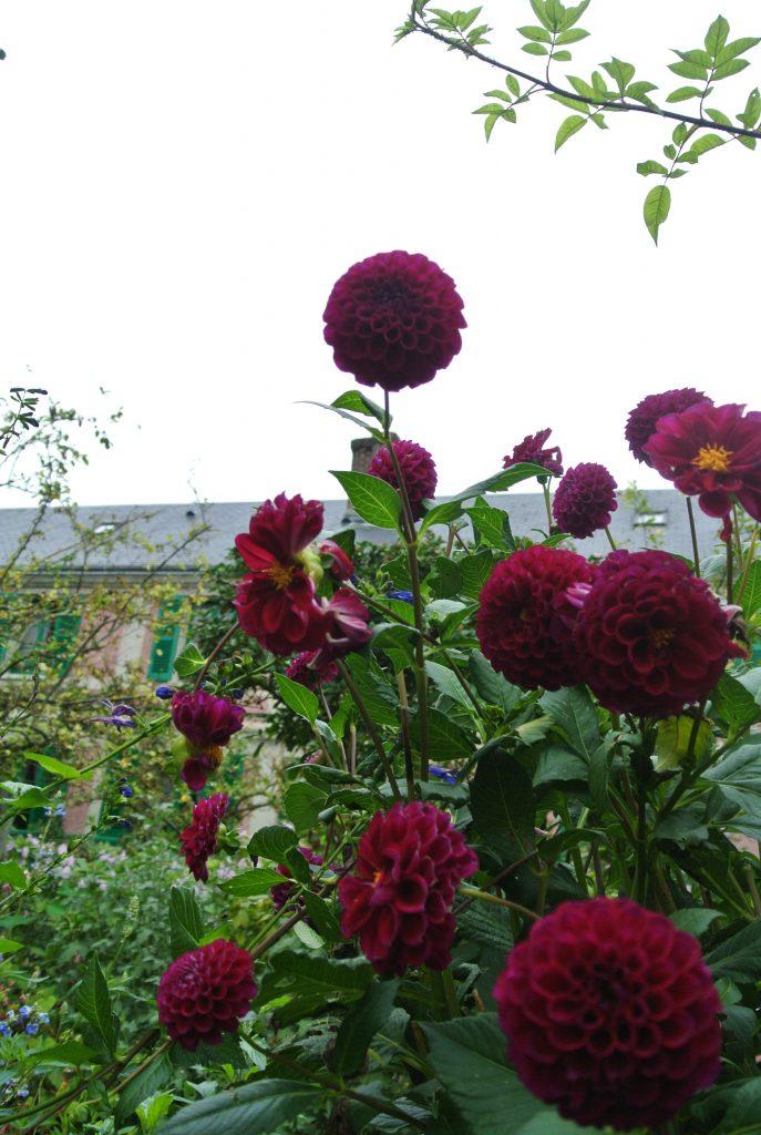 モネのアトリエと睡蓮の庭園