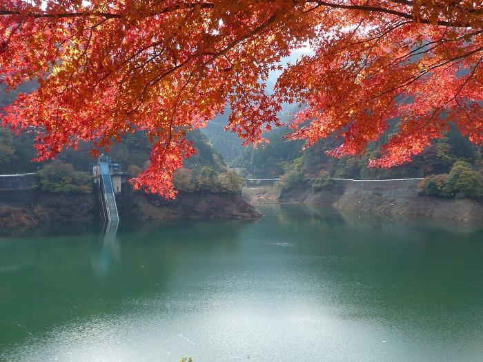 紅葉狩りに名栗湖に行ったものの、見つけたのは「もののけ姫」の世界と真っ暗な鍾乳洞でした