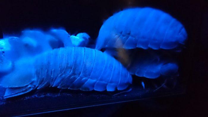 「沼津港深海水族館」で深海魚を見て、隣の施設で深海魚を食べる
