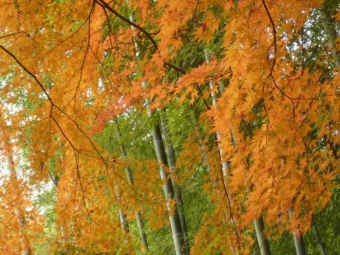 埼玉・能仁寺には、有名人が多数訪れる変わった経歴の住職がいる。