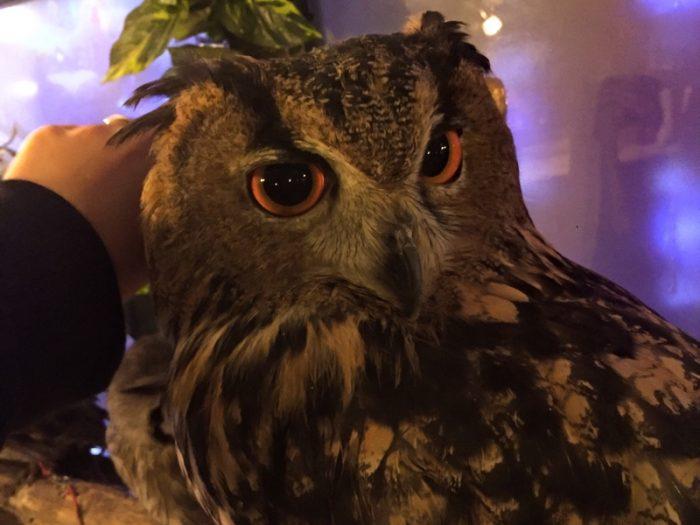 「アウルの森」フクロウに触る
