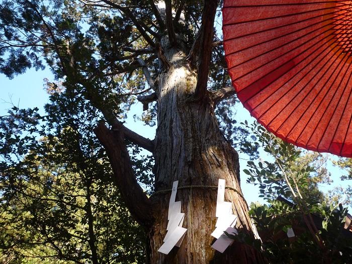 ●13【宝登山神社-136ご神木】●(700px) P1120700