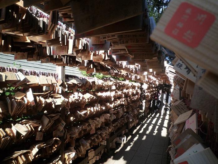 ●5【川越氷川神社-44】●(700px) P1120934