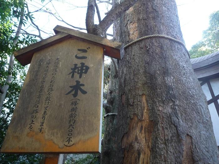 ●6【川越氷川神社-23】●(700px) P1120913