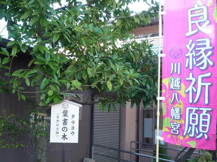 ●17【川越八幡宮-65】●(700px) P1130044
