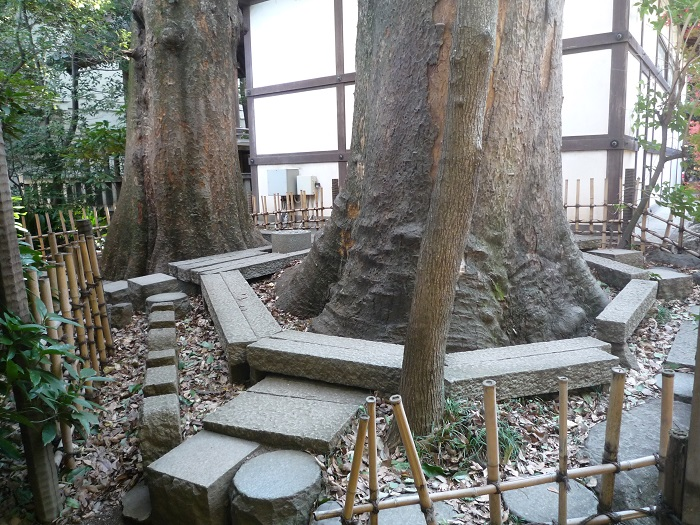 ●7【川越氷川神社-4】●(700px) P1120894