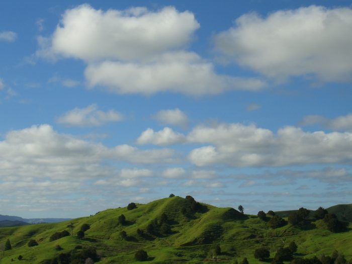 CIMG5532 ニュージーランドの牧歌的風景