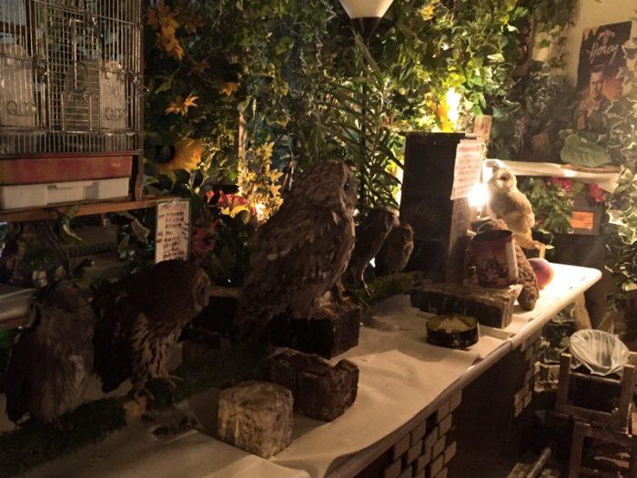 「アウルの森」フクロウたち