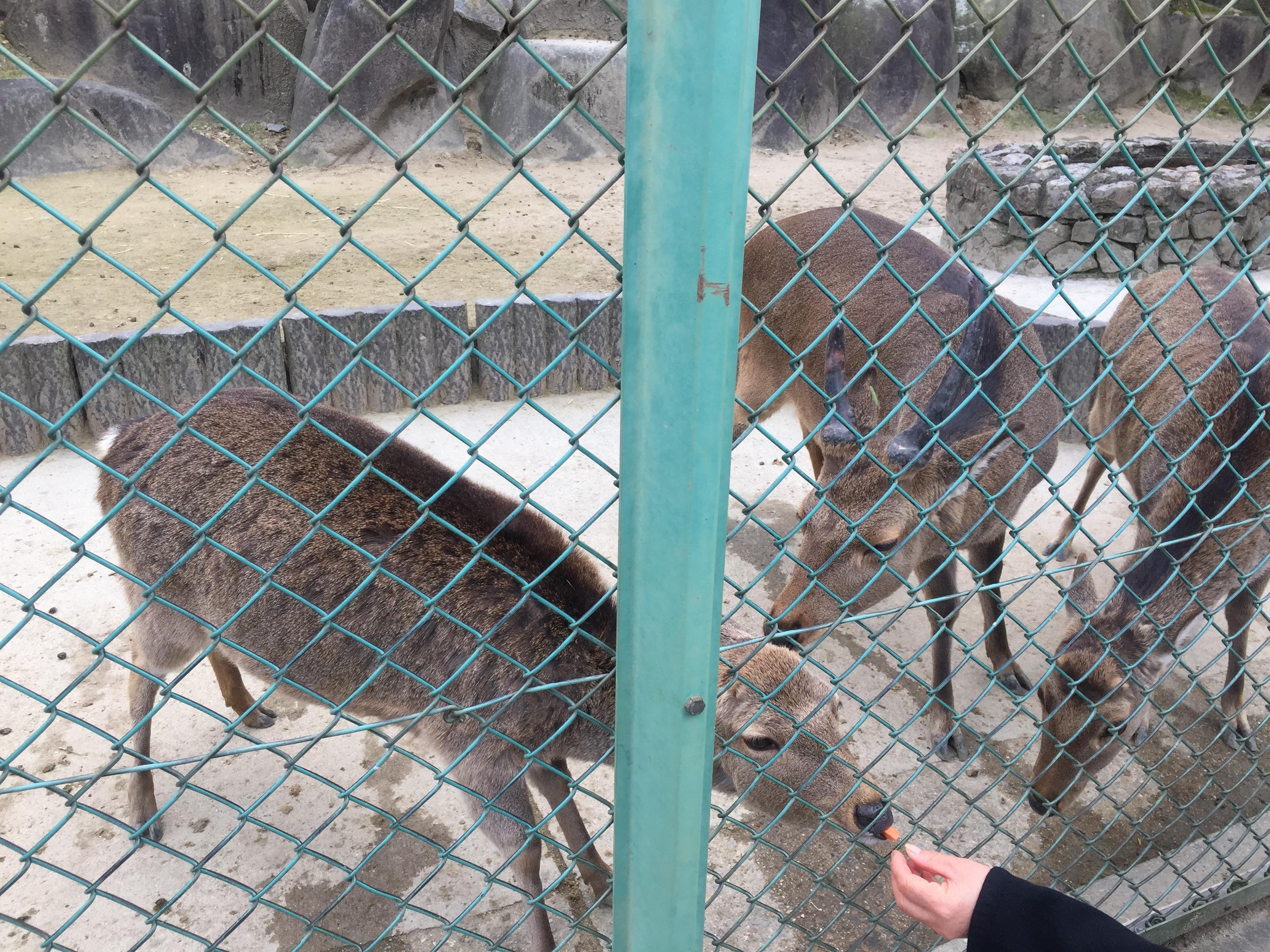 東公園動物園_鹿