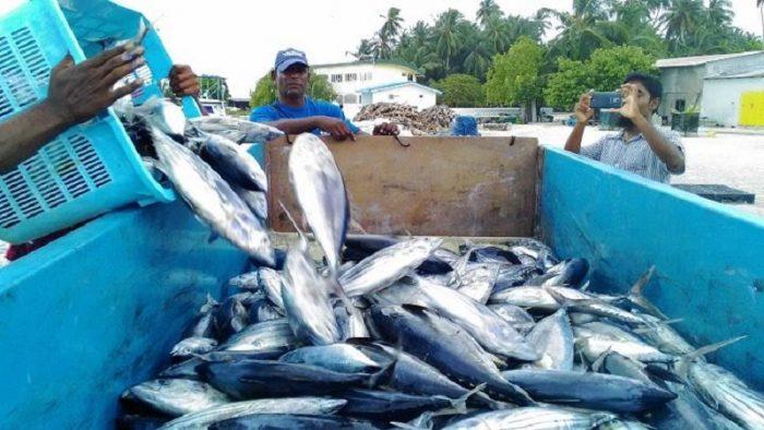 魚なしでは語れないモルディブの日常と産業