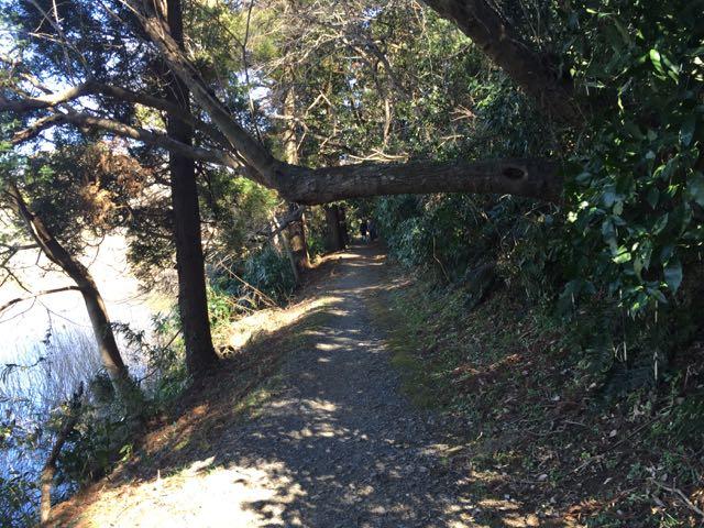 城址 水平な枝小道