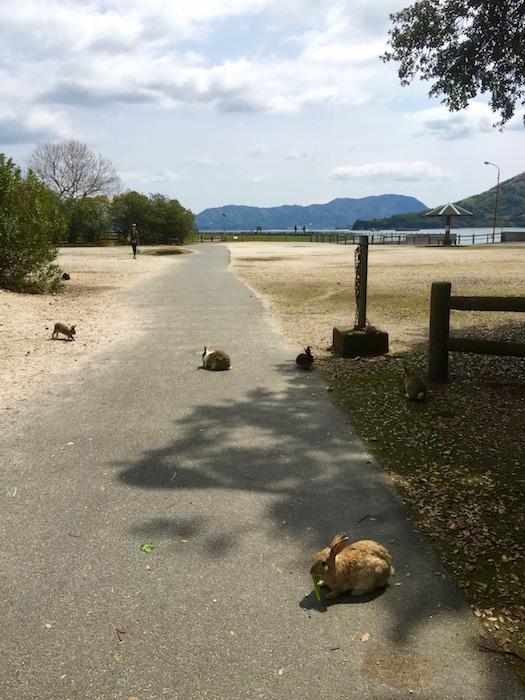 大久野島 ウサギ