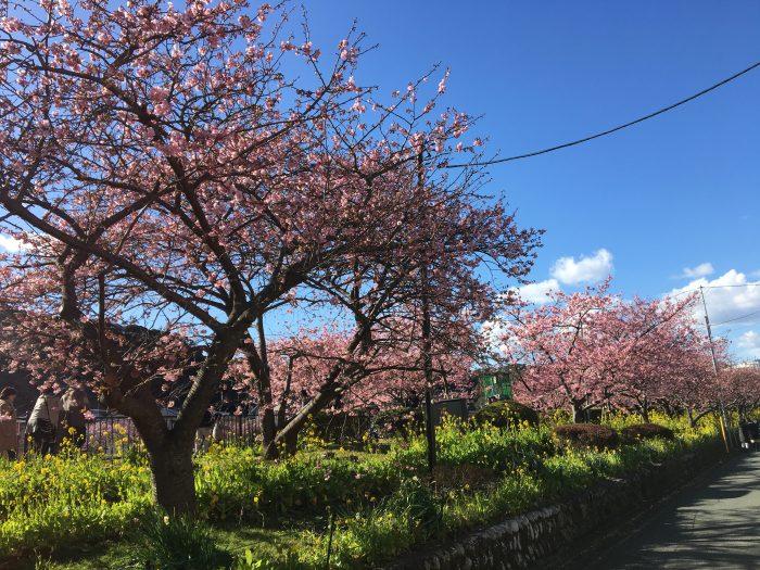 私たちが守るべき日本の美しい景観