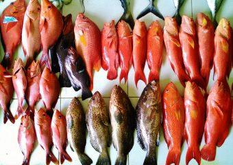 魚市場08