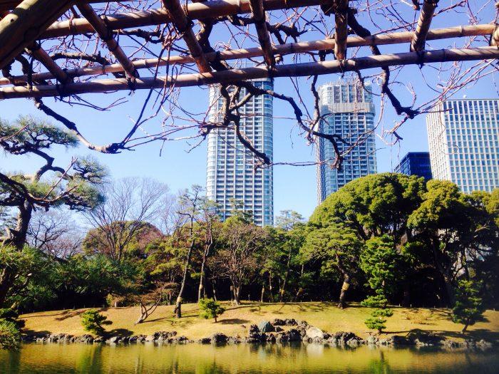 池から眺めるビル群