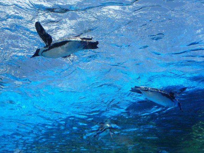 空飛ぶペンギンが撮れる!サンシャイン水族館の屋外エリアがリニューアル!