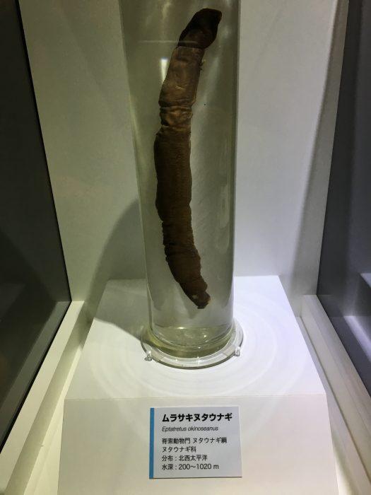 ムラサキヌタウナギ