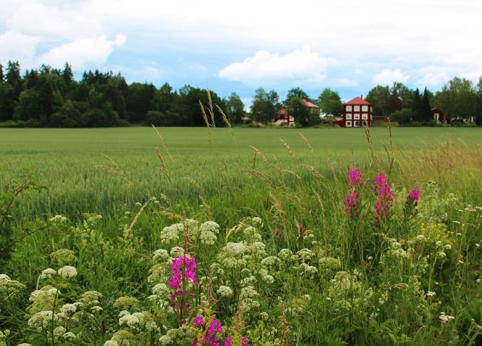 北欧の夏の終わりに