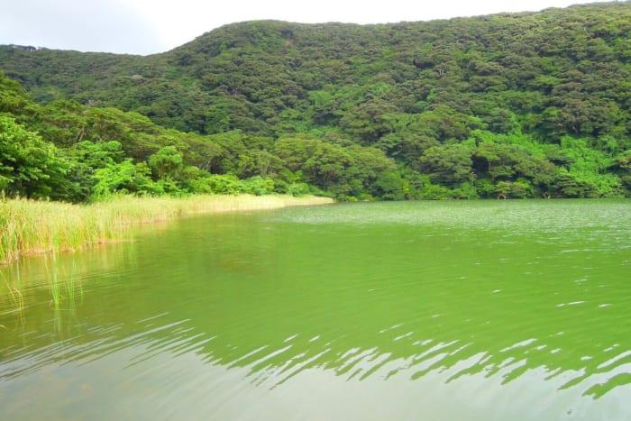自然の始まりと完成形が共存する島・三宅島