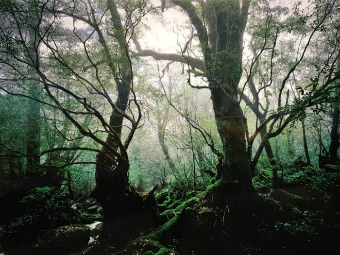 森の叙情詩