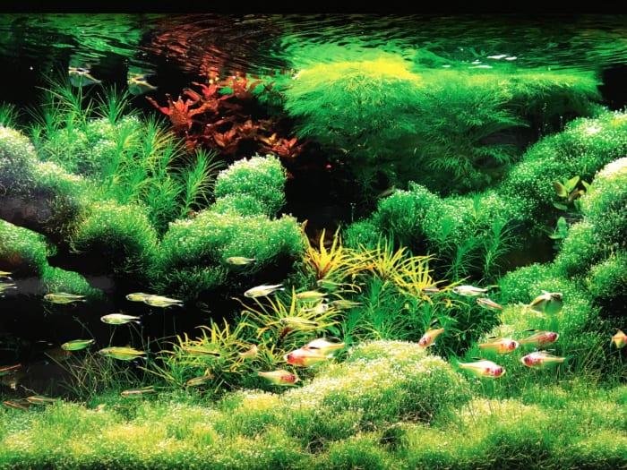 光彩の水辺