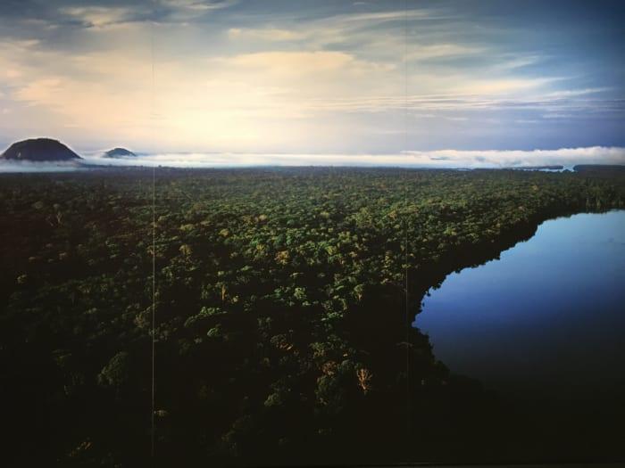 熱帯雨林の夜明け